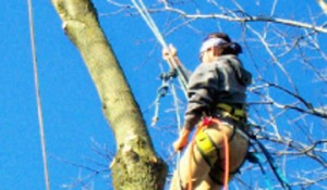 tree trimming services benton city