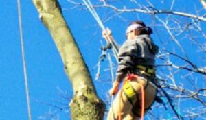 tree trimming services benton city