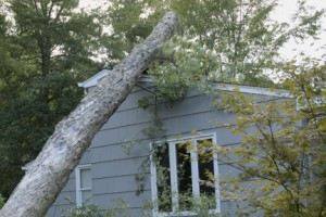 tree trimming services tri-cities kennewick pasco richland