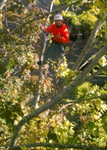 tree cutting services tri-cities kennewick pasco richland